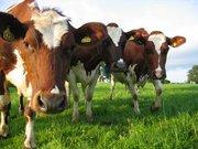 Добавки в корма для с/х животных и птиц